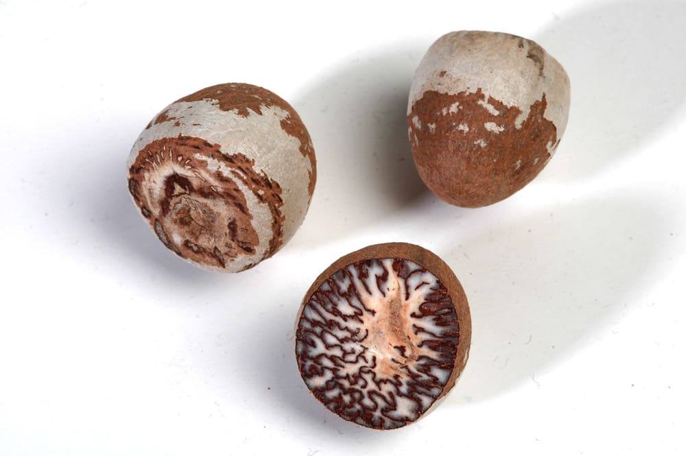 Attention PUV Drivers: Chew this Nut and You'll Get Fined PHP6,000