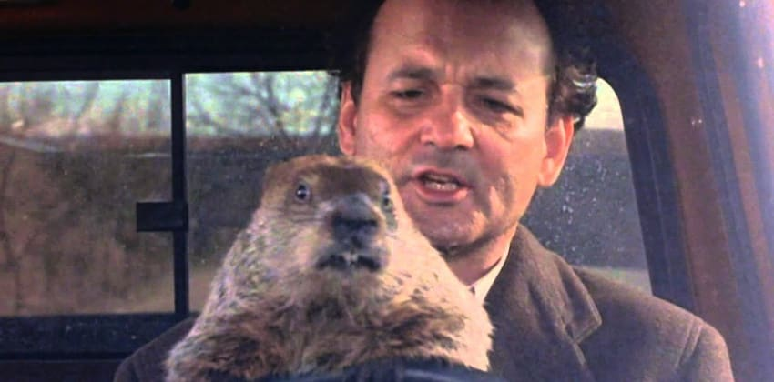 Bill Murray with Groundhog in film