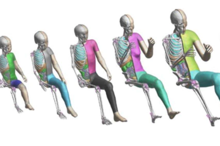 THUMS Virtual Human Body Model Software